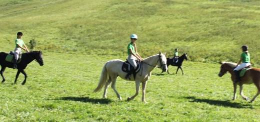 I mille modi in cui un cavallo pu salvarti di sofia - Avere un cavallo ...