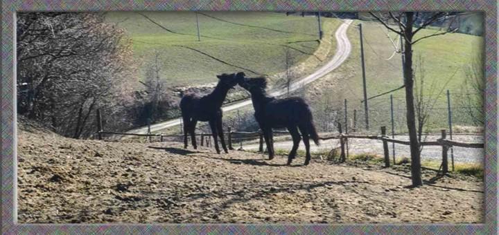 pony-piccoli-in-paddock2