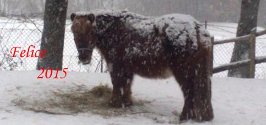 rita nella neve copia